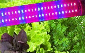 Светильник светодиодный для растений 1200мм 42Вт красный: синий 4: 2 ФИТО свет